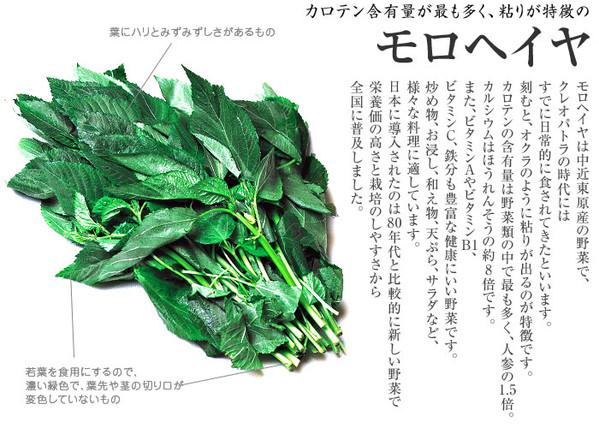 Food0101